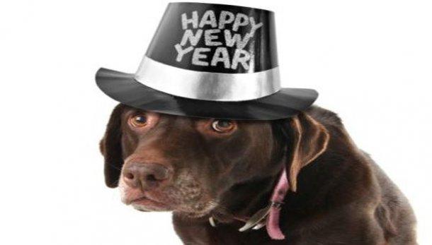 Capodanno-Strage-di-cani-e-gatti-anche-nel-2012
