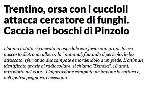 Trentino, orsa attacca cercatore di funghi